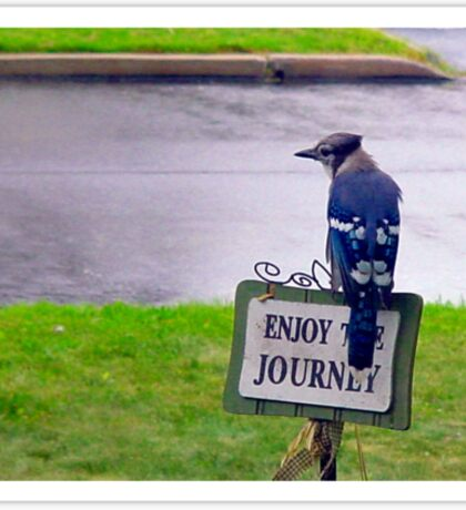 Enjoy the Journey Blue Jay Sticker