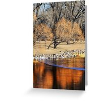 Willow Reflection Greeting Card