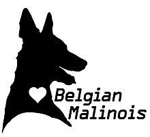 Malinois <3 by stellarmule
