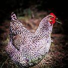 Chicken by JEZ22