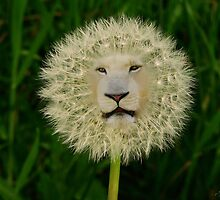 ☝ ☞DANDELION PICTURE/CARD~ DANDY LION LOL☝ ☞ by ✿✿ Bonita ✿✿ ђєℓℓσ