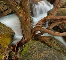 Tree, rock, water, Mt. Buffalo by Kevin McGennan