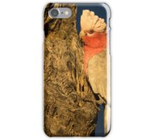 Morning Galahs - Kilcowera Station iPhone Case/Skin