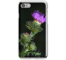 Purple prickly carduus iPhone Case/Skin