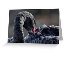 Black Swan - Cygnus atratus Greeting Card