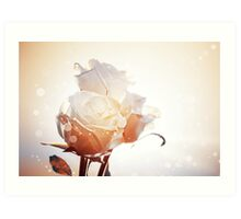 Romantic background with three white roses Art Print