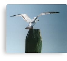 Perching Seagull Canvas Print