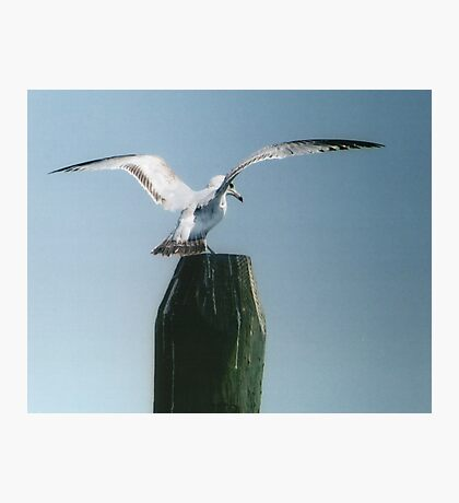 Perching Seagull Photographic Print