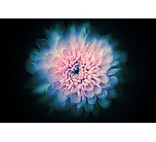 Abstrac beautiful flower background Photographic Print