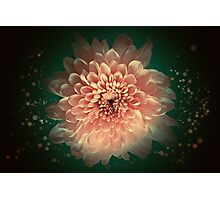 Abstract flower background Photographic Print