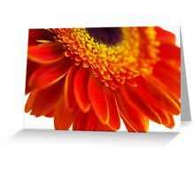 Orange flower background with close-up gerbera Greeting Card