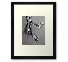 Dried Blooms Framed Print