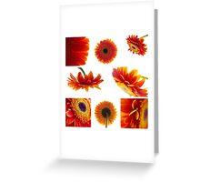 Set of orange gerbera flowers Greeting Card