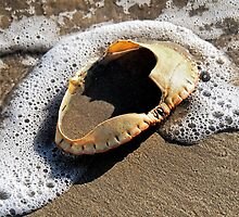 Empty Crab Shell by Susie Peek