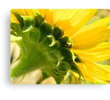Sunflower    ^ Canvas Print