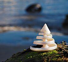 Spiralling Troca Shell by Susie Peek