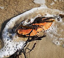 Crab Shell and Seaweed by Susie Peek