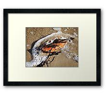 Crab Shell and Seaweed Framed Print