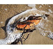 Crab Shell and Seaweed Photographic Print