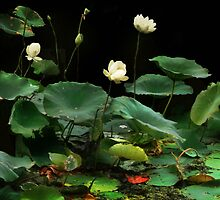 Twilight in the Lotus Patch by Nadya Johnson