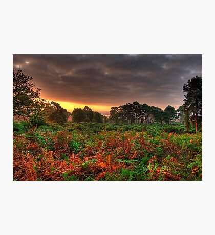 Autumn Sunrise at Arne Forest in Dorset Photographic Print