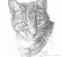 gray tiger cat drawing by Mike Theuer