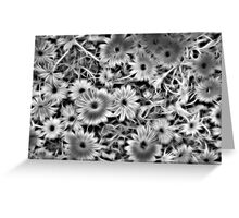 Flower Black and White Greeting Card