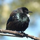 Young Tui....One day I will be King like my Daddy..........! by Roy  Massicks