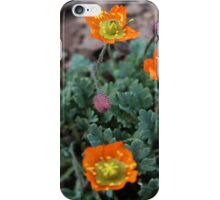 Dwarf Alpine Poppy (Papaver pygmaeum) iPhone Case/Skin