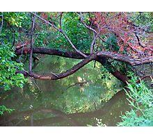 Oklahoma City Creekside Autumn Landscape Photographic Print