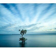 Mangrove Tree at Wellington Point Photographic Print