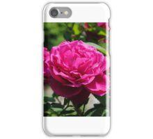Close Up Pink Rose iPhone Case/Skin