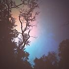 Dawn by Justin Petti