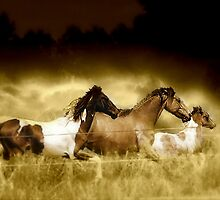 Horses on the Run by Darlene Lankford Honeycutt