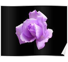 Dreamy Blue Moon Rose - Black Background Poster
