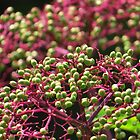 Elderberry Bouquet by lorilee