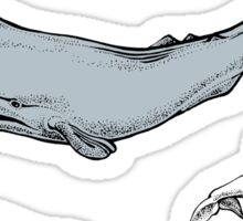 Whales are everywhere Sticker