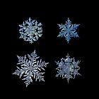 Four snowflakes on black background by Alexey Kljatov