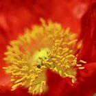 Flower by Jen (Wahl) Durant