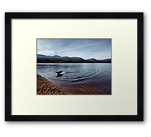 Dog playing at Loch Morlich, Aviemore Cairngorms Framed Print