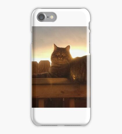 Sunset cat on fence ~ Clover iPhone Case/Skin
