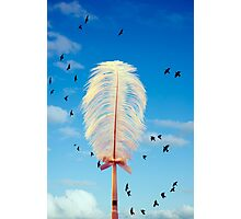 white feather and birds flying Photographic Print