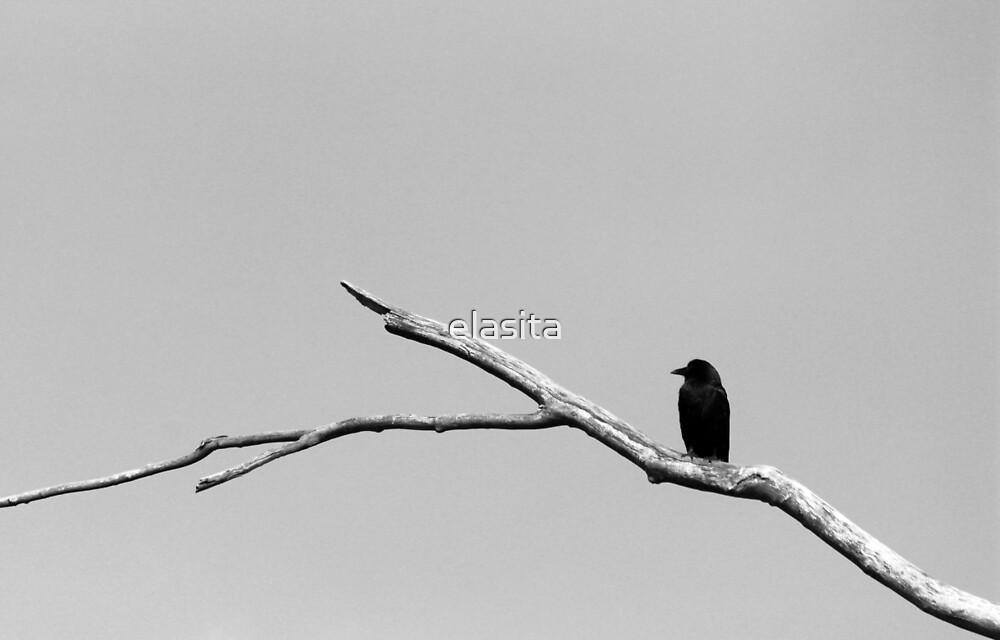 Lone Crow by elasita