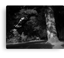 Picnic Under The Monkey Puzzle Canvas Print