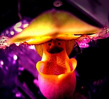 Tilt-a-Whirl - Orchid Alien Discovery by ©Ashley Edmonds Cooke