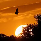 Everglades Sunset by Sheri L Gladish
