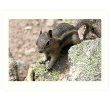 Rocky Mountain Squirrel Art Print