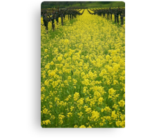 Spring in the Vinyard Canvas Print