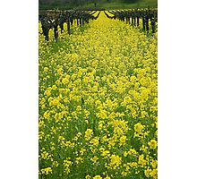 Spring in the Vinyard Photographic Print