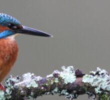 Kingfisher on Riverside Branch Sticker